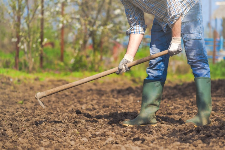 hoeing the soil for vegetables to grow