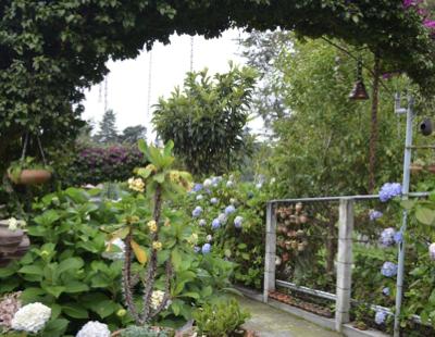 How to Make Your Backyard Garden Layout Shine