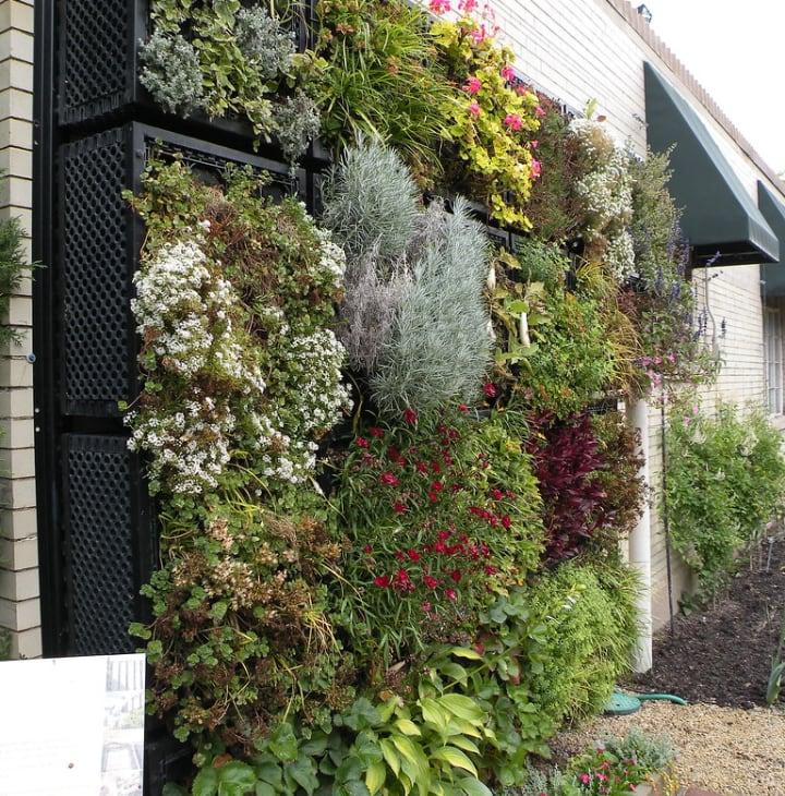 living wall garden in the backyard