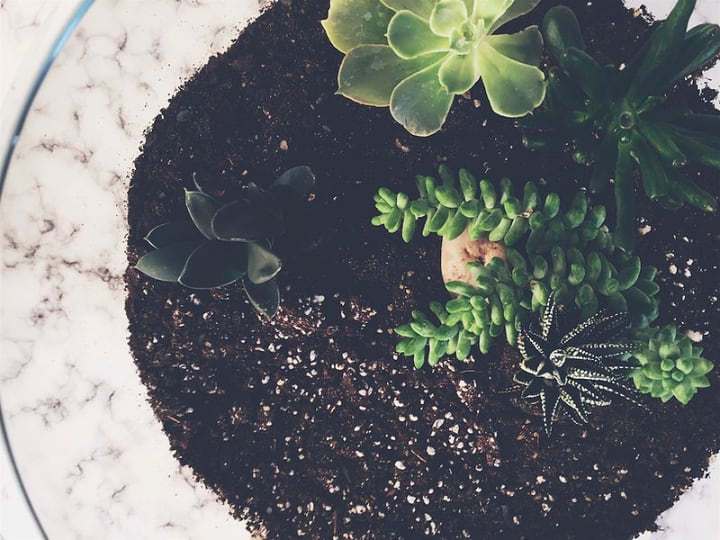 planting succulents on terrarium