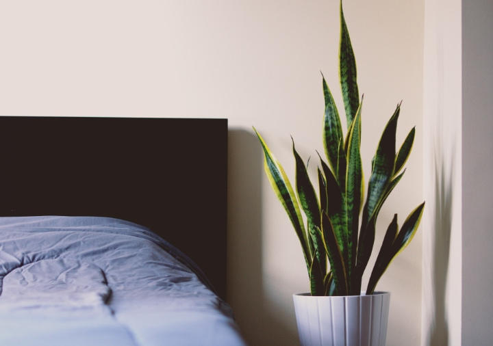 snake plant on night stand