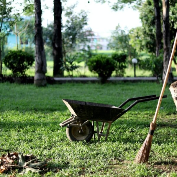 wheelbarrow waiting to tow away dried leaves