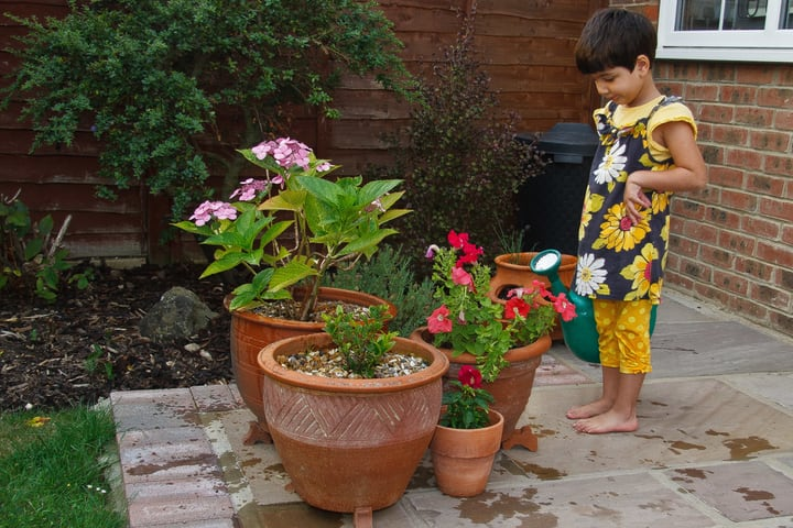 healthy plants watered with rain water