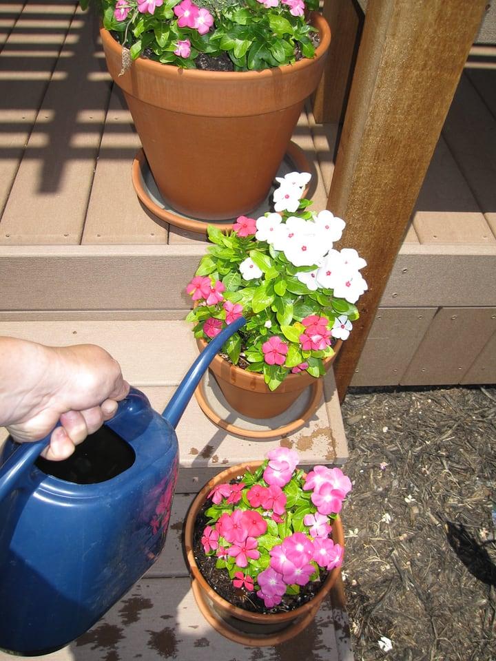 using rain water in the flower garden