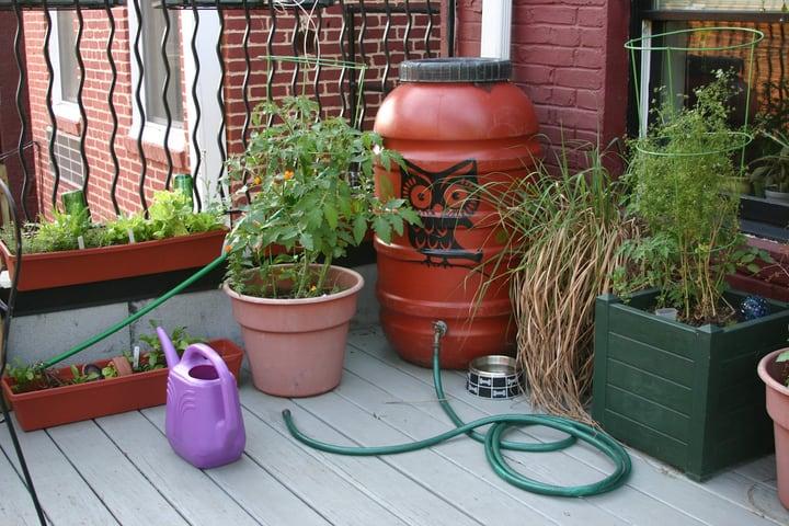 using rain water on houseplants