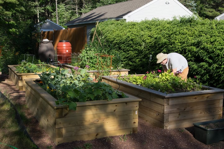 using rain water on vegetable patch