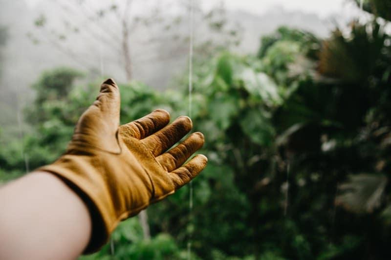gloves gardening