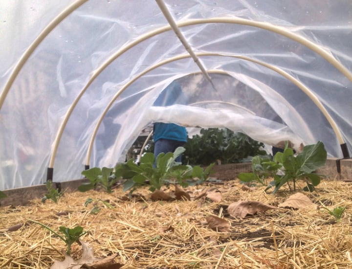 small greenhouse with plastic sheeting