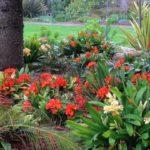 african botanic garden