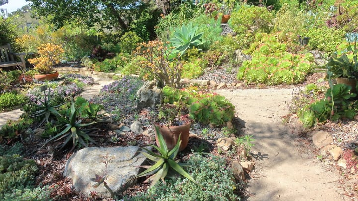 succulent botanic garden