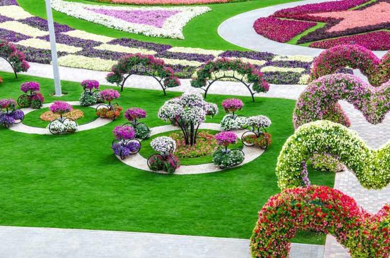 Rose flower garden ideas