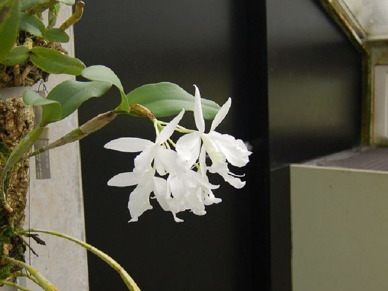 white aerial plants