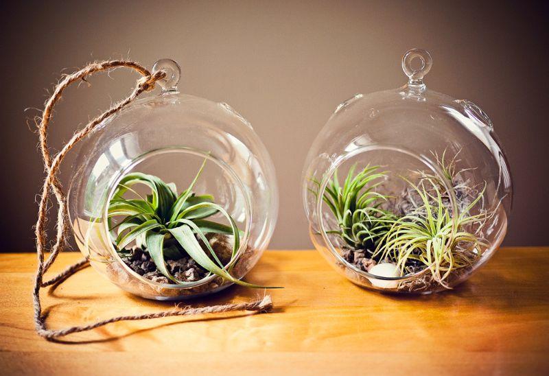 air plant bowls