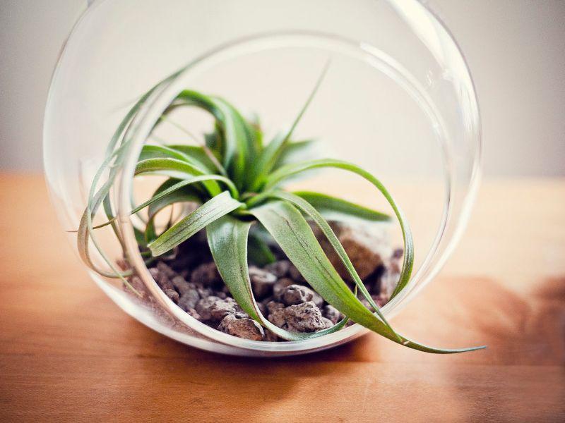 plant design ideas