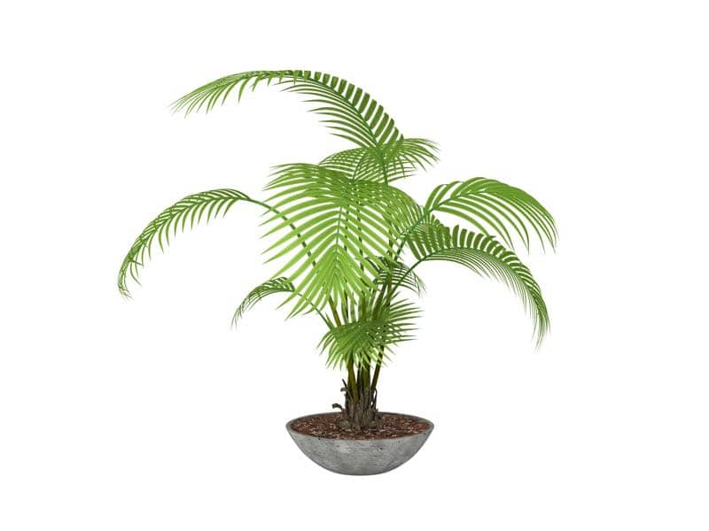 areca palm plant for bedroom