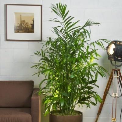 best bamboo plants