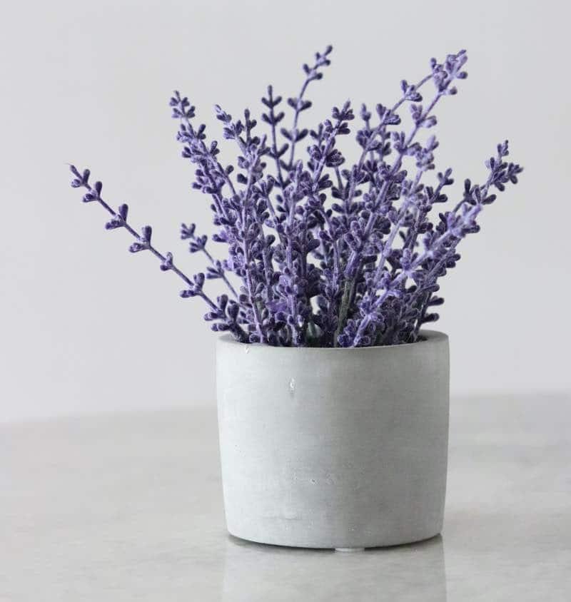 best plants for bedroom oxygen
