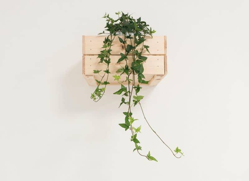 best plants for bedroom