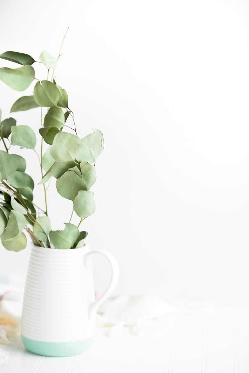 best plants for dark bedroom to help sleep