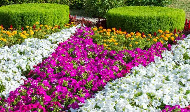 dubai flower garden