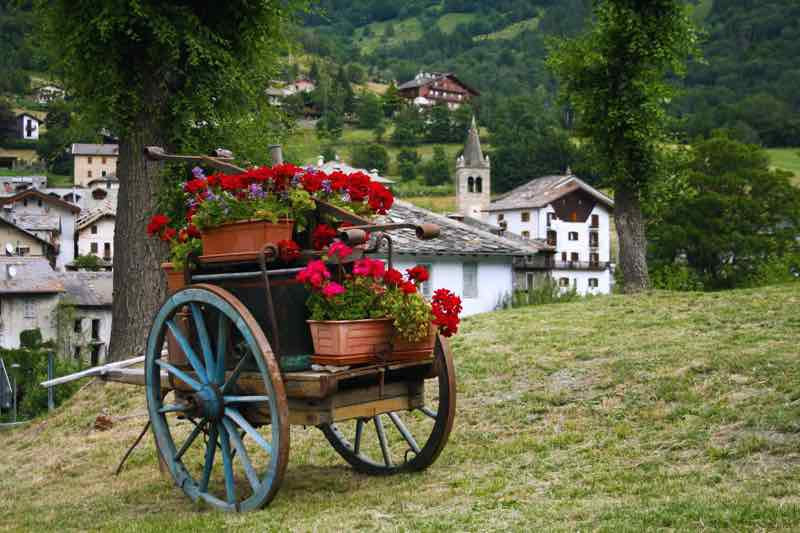 flowers carriage 1