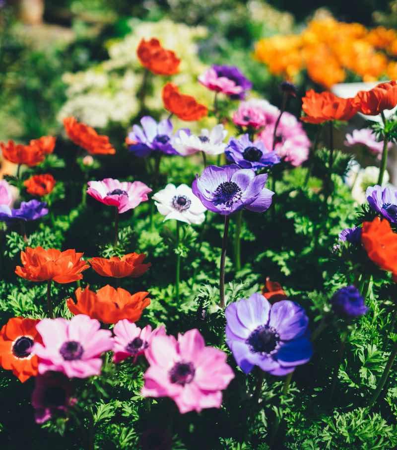 flowers for backyard
