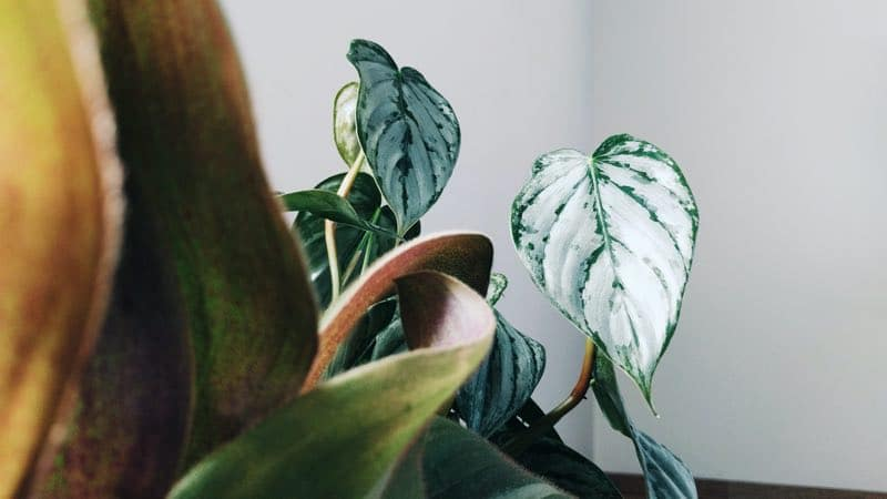 hanging plants ideal for bedroom