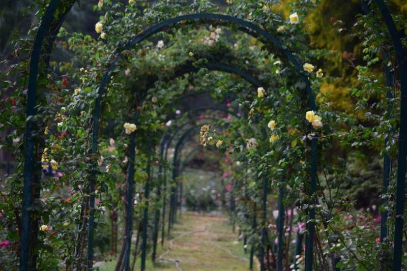 floral archway secret garden