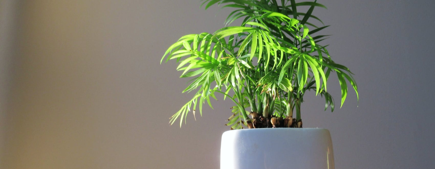 Bamboo Plants 101 How To Grow Happy Bamboo Plants Indoors