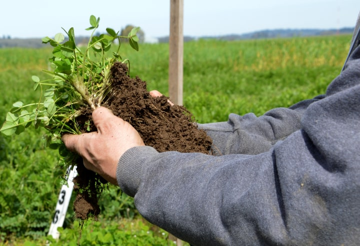 planting organic cover crops to protect the soil