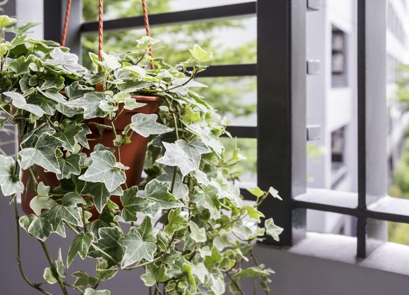 plants for bedroom NASA 1
