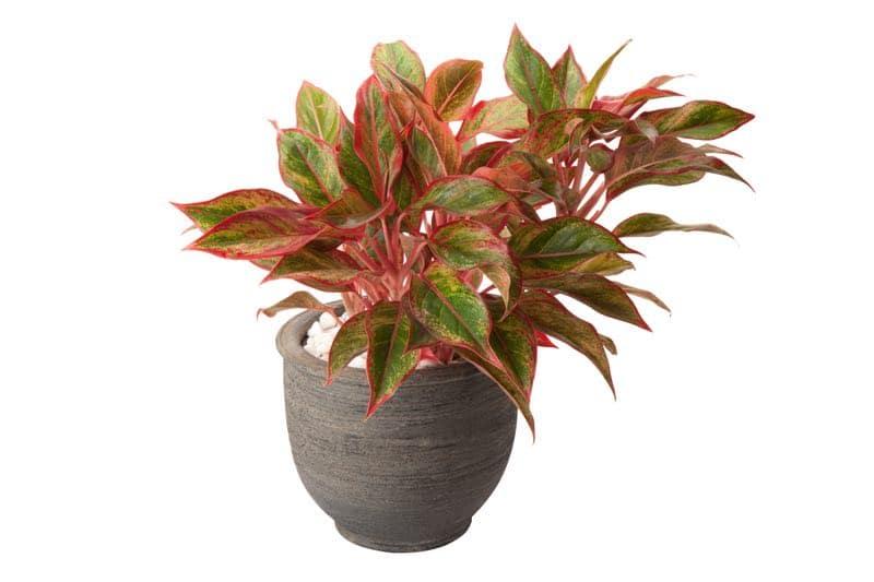plants for bedroom feng shui