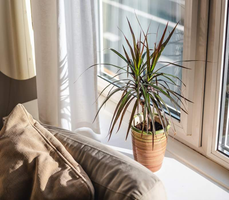 plants for bedroom UK