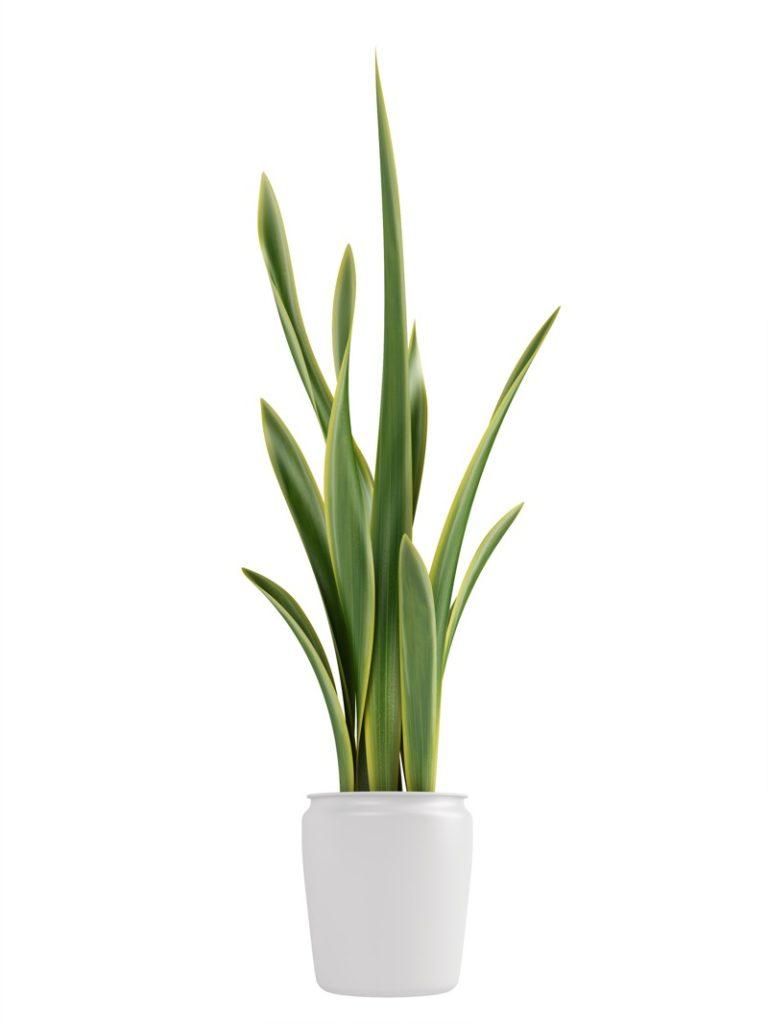 plants for bedroom 30 best bedroom plants for better sleep