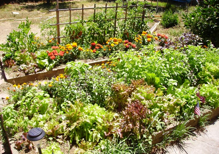 raised garden bed with vegetables herbs and flowers