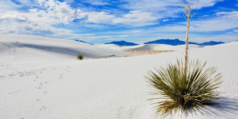 best yucca plant types