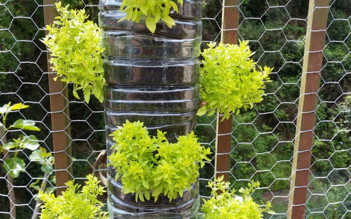 cheap diy vertical garden