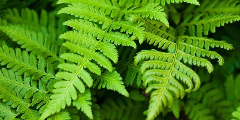 ferns vertical garden beds