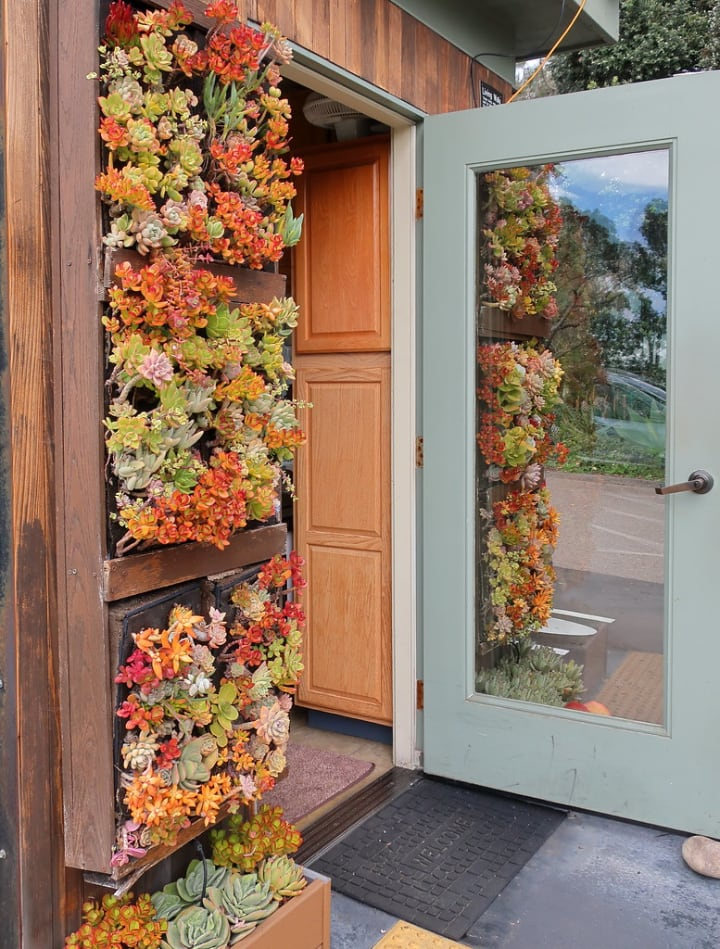 front door succulent vertical garden