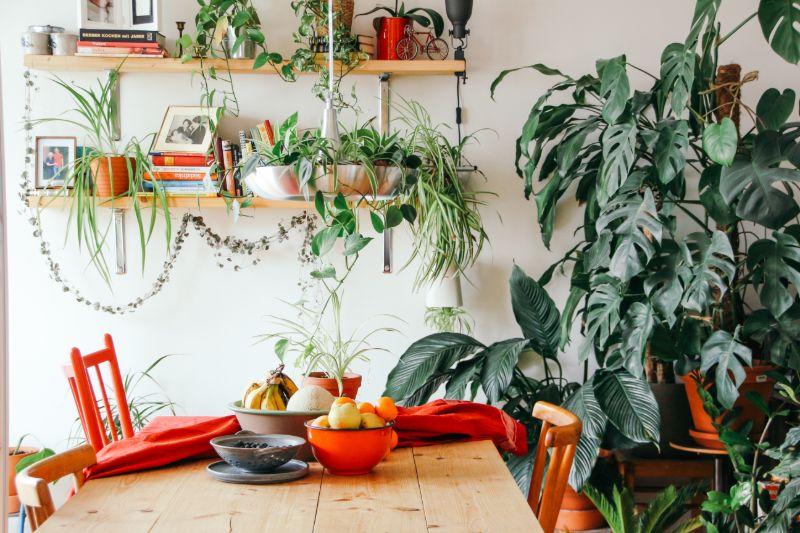 monstera plants room