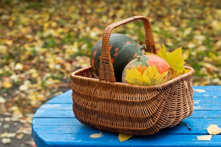 pumpkin harvests from garden in autumn
