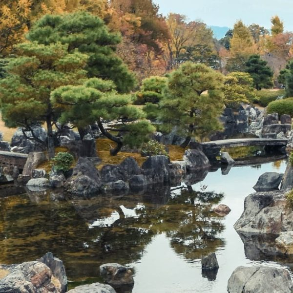relaxing rock garden pond