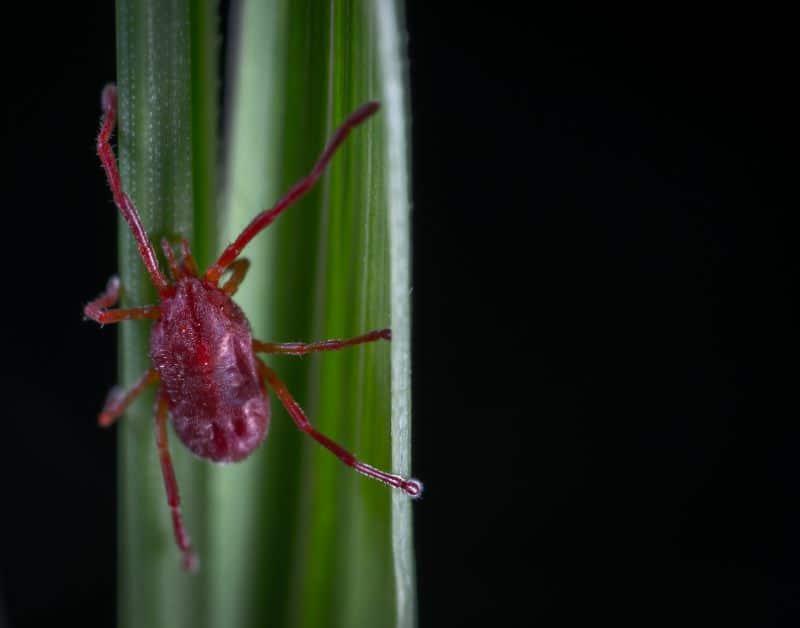 spider mite monstera