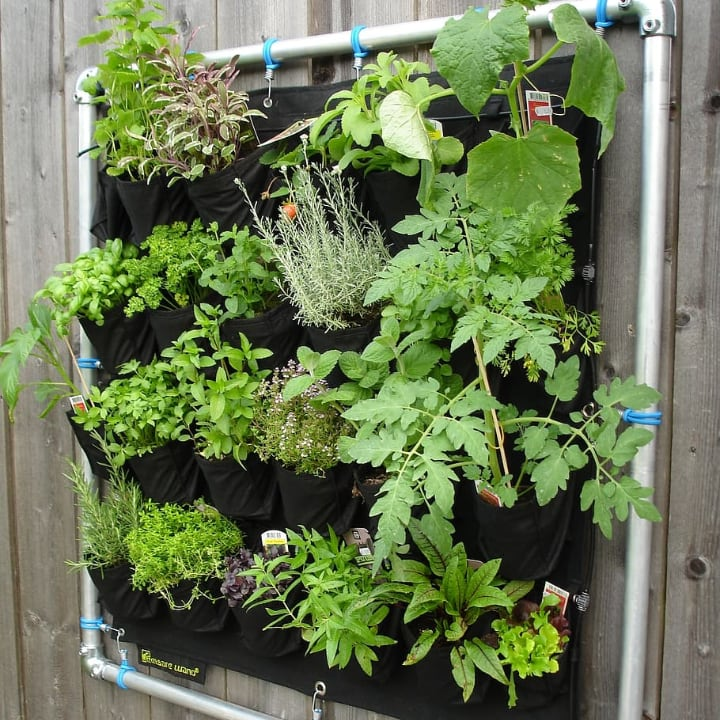 vertical garden is suitable for small spaces