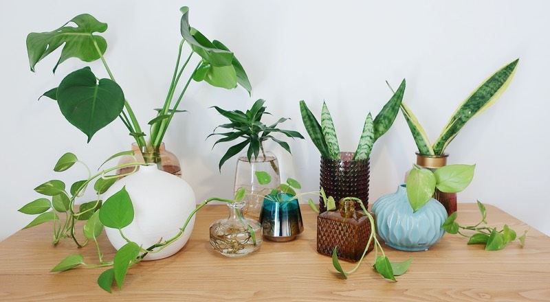 water plants indoor home