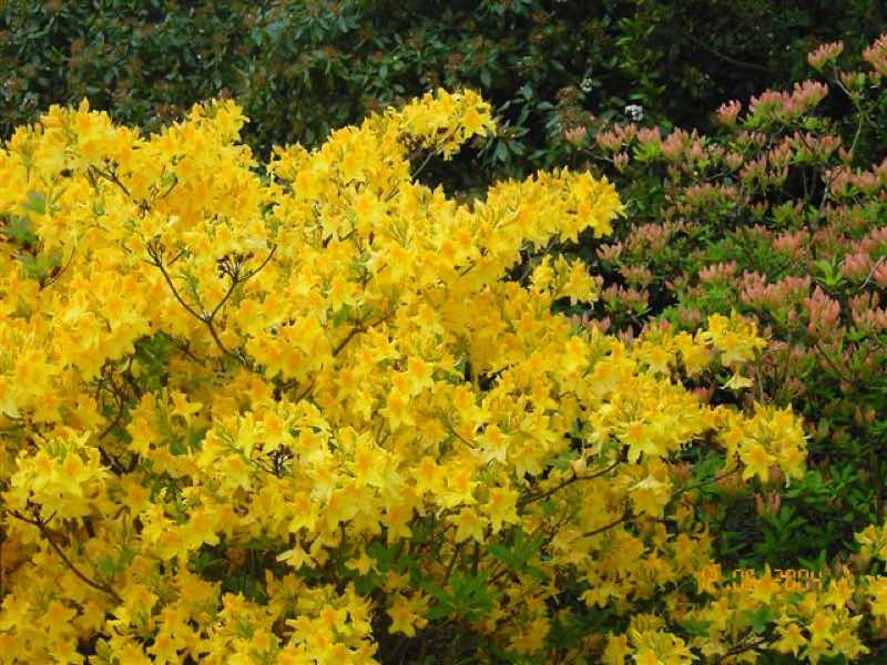 yellow flowering plants