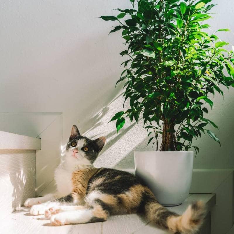yucca plants animals pets safety