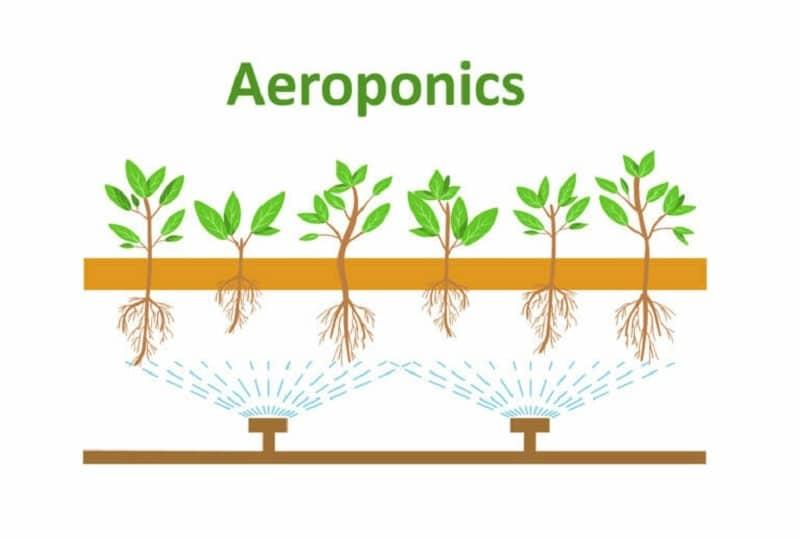 aeroponic-system