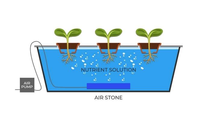aquaponic dwc deep water system