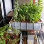 aquaponics better than hydroponics